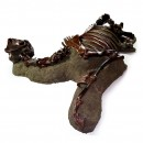 Fossilized North American Horse 4