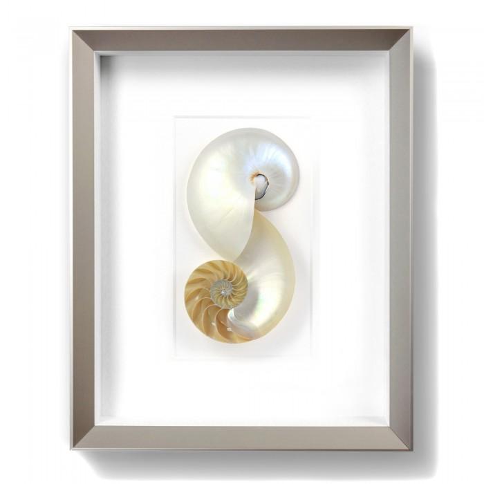 11 x 14 Nautilus 1