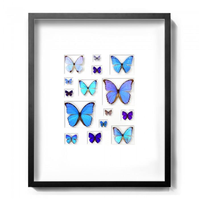 24 x 30 Cerulean Butterflies 1
