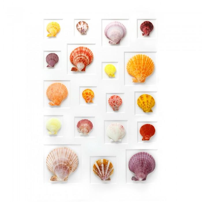 24 x 30 Select Scallop Mosaic 1