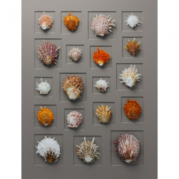 24 x 30 Spiny Oyster Mosaic 1