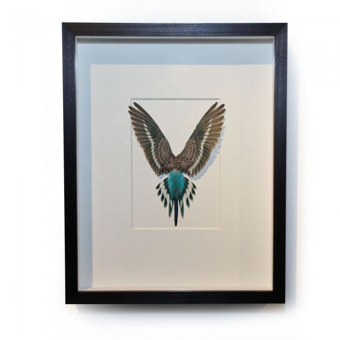 14 x 18 Shell Parakeet Bird – Light blue and grey 1