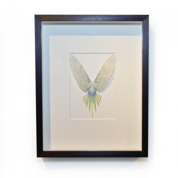 14 x 18 Shell Parakeet Bird – Grey, Light blue and yellow 1