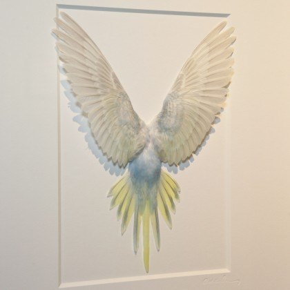 14 x 18 Shell Parakeet Bird - Grey, Light blue and yellow
