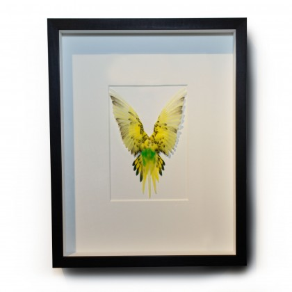14 x 18 Shell Parakeet Bird - Yellow and Green