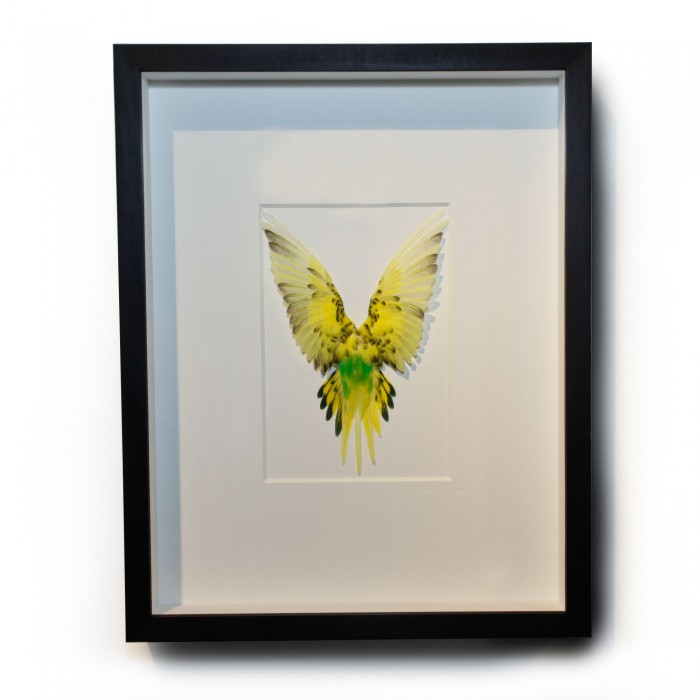 14 x 18 Shell Parakeet Bird – Yellow and Green 1