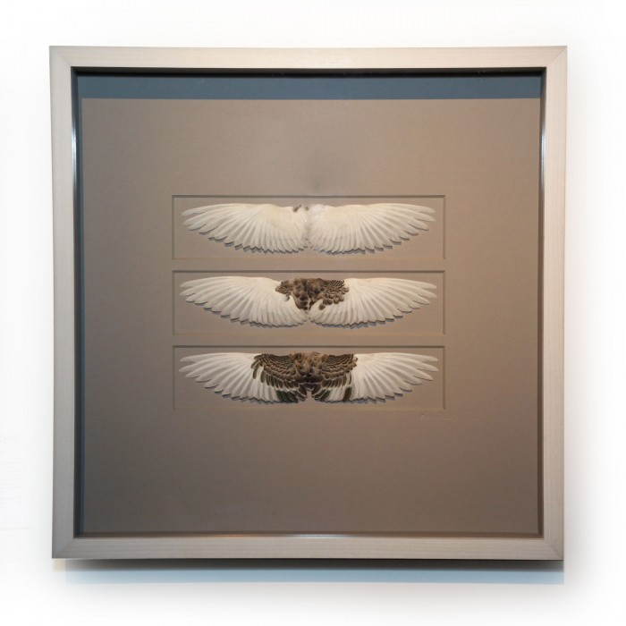20 x 20 Wing Study White to Grey 1