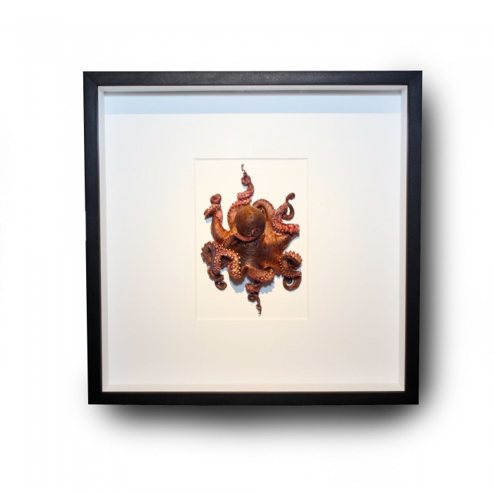 20 x 20 Preserved Octopus 1