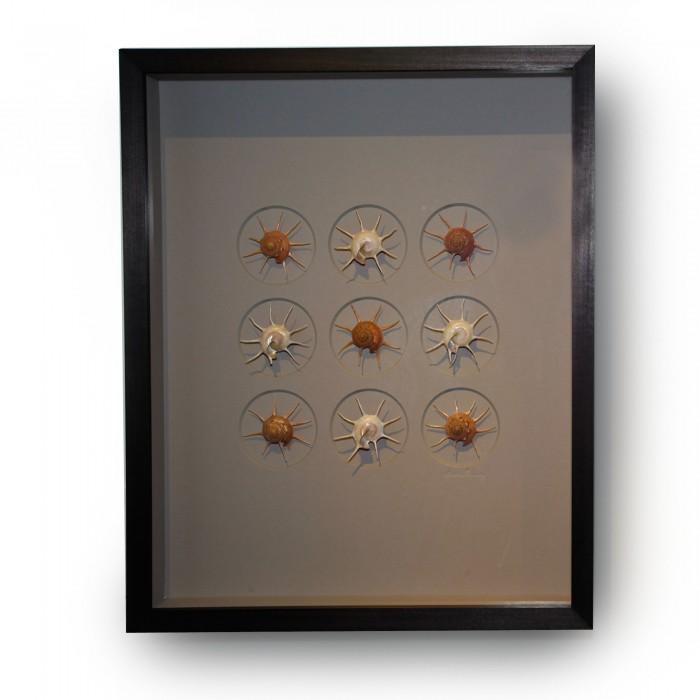 16 x 20 Gilded Starshells Alternate 1