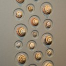11 x 14 Candy Shells 2