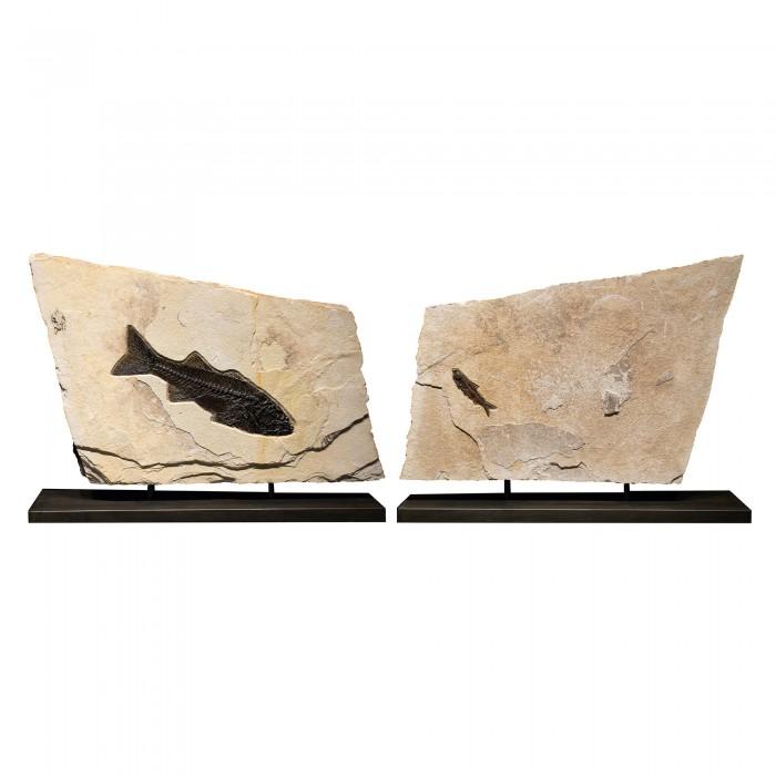Fossil Sculpture 02_140922364 Sculpture 1