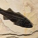 Fossil Sculpture 02_140922364 Sculpture 2