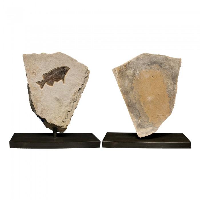 Fossil Sculpture 02_150105020 Sculpture 1