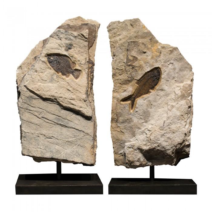 Fossil Sculpture 02_150430501 Sculpture 1