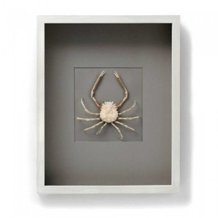 16 x 20 Snow Spider Crab 1