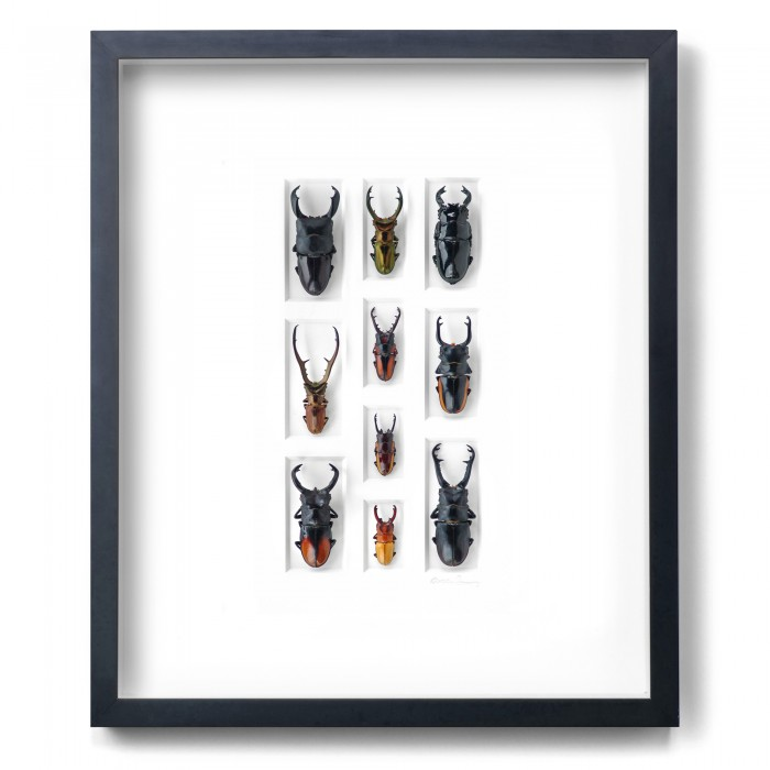 20 x 24 Stag Beetle Mosaic 1