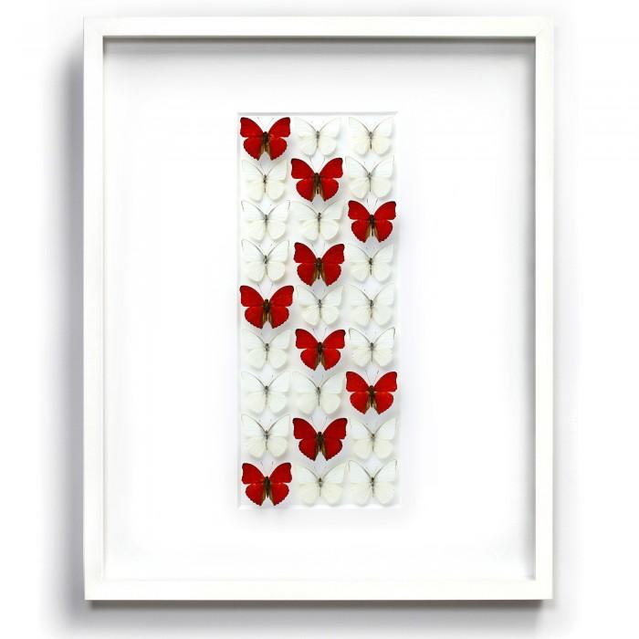 24 x 30 Sangaris Levels – Butterflies 1