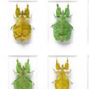 24 x 30 Walking Leaf Variations 2