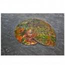 02_CF1_1070 Ammonite 3