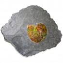 02_CF1_1070 Ammonite 6