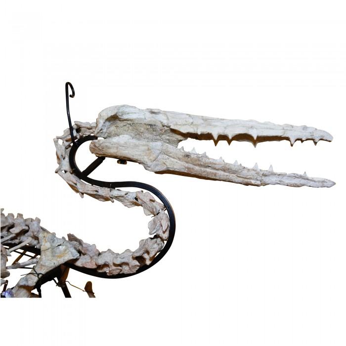 Odontopteryx Toothed Bird 1