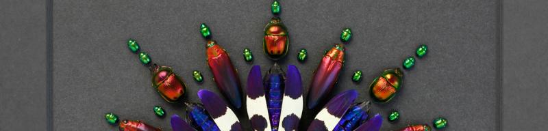 Pheromone, Christopher Marley, Mosaic, Bug Art, Insect Art, Taxidermy