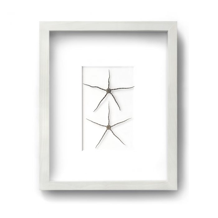 11 x 14 Brittle Star Duo (White Mat with Bleached Hardwood Frame) 1