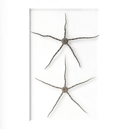 11 x 14 Brittle Star Duo (White Mat with Bleached Hardwood Frame)