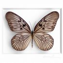 11×14 Champagne Ricepaper Butterfly 2