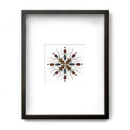16x20 Crucifera Prism
