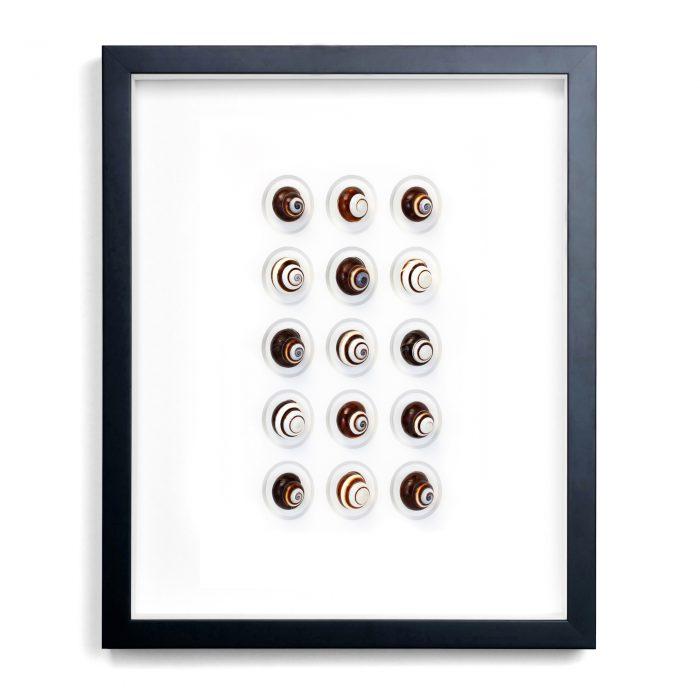 16×20 Regal Snails 1