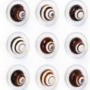 16×20 Regal Snails 2
