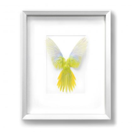 16x20 Turquoisine Parrot - Yellow and White
