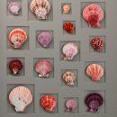 24×30 Select Scallop Mosaic (Berry) 2
