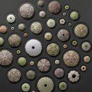 32×32 Urchin Test Mosaic 2