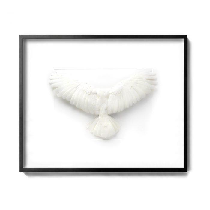 40×32 Sulphur-crested Cockatoo 1