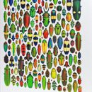 Book – Pheromone, The Insect Artwork 2