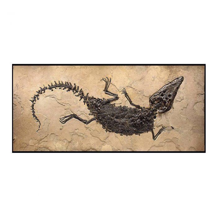 Crocodile Fossil Mural 1