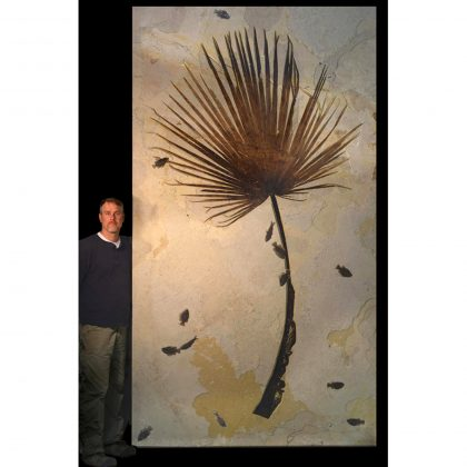 Palm Frond and Fish Fossil Mural