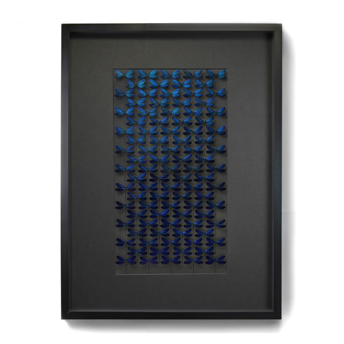 Framed 40 x 30 Museum Damselfly Wash 1