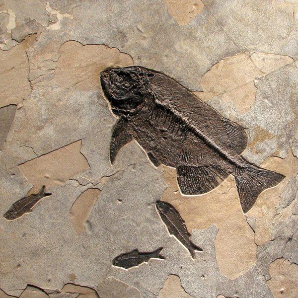 Fossil Mural 02_111010400cm