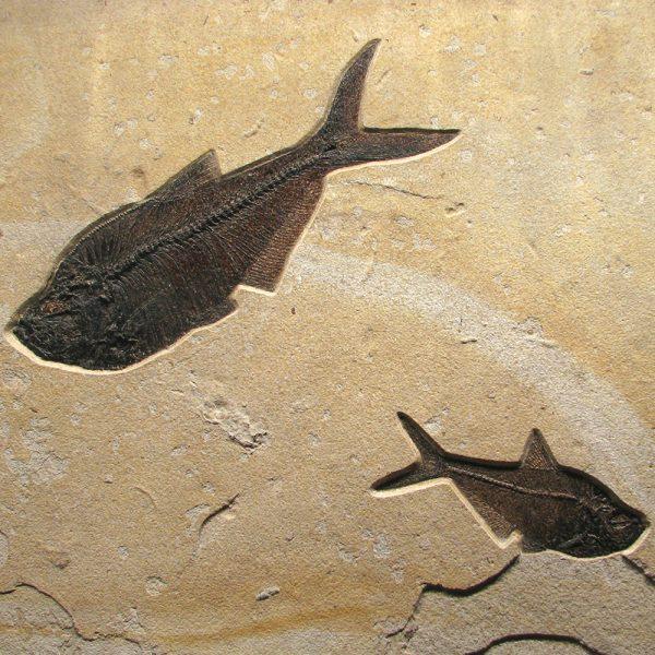 Fossil Mural 02_Q110330550am