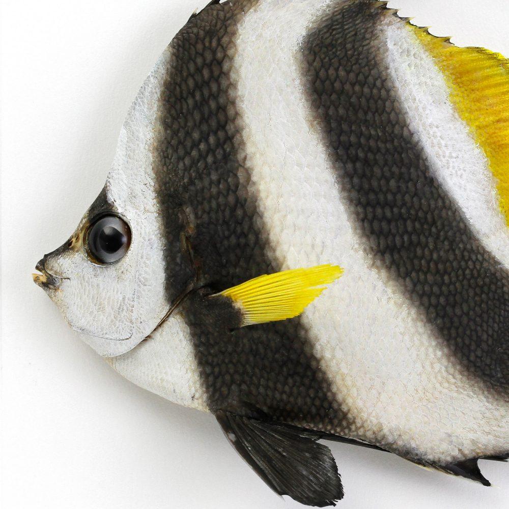 11 x 14 Banner Fish