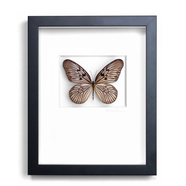 11 x 14 Champagne Ricepaper Butterfly