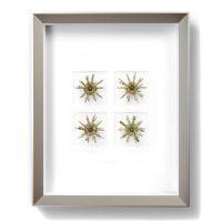 11 x 14 Sputnik Urchin Mosaic