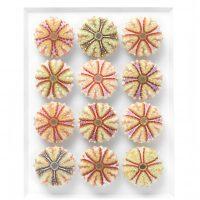 11 x 14 Variegated Urchins 2