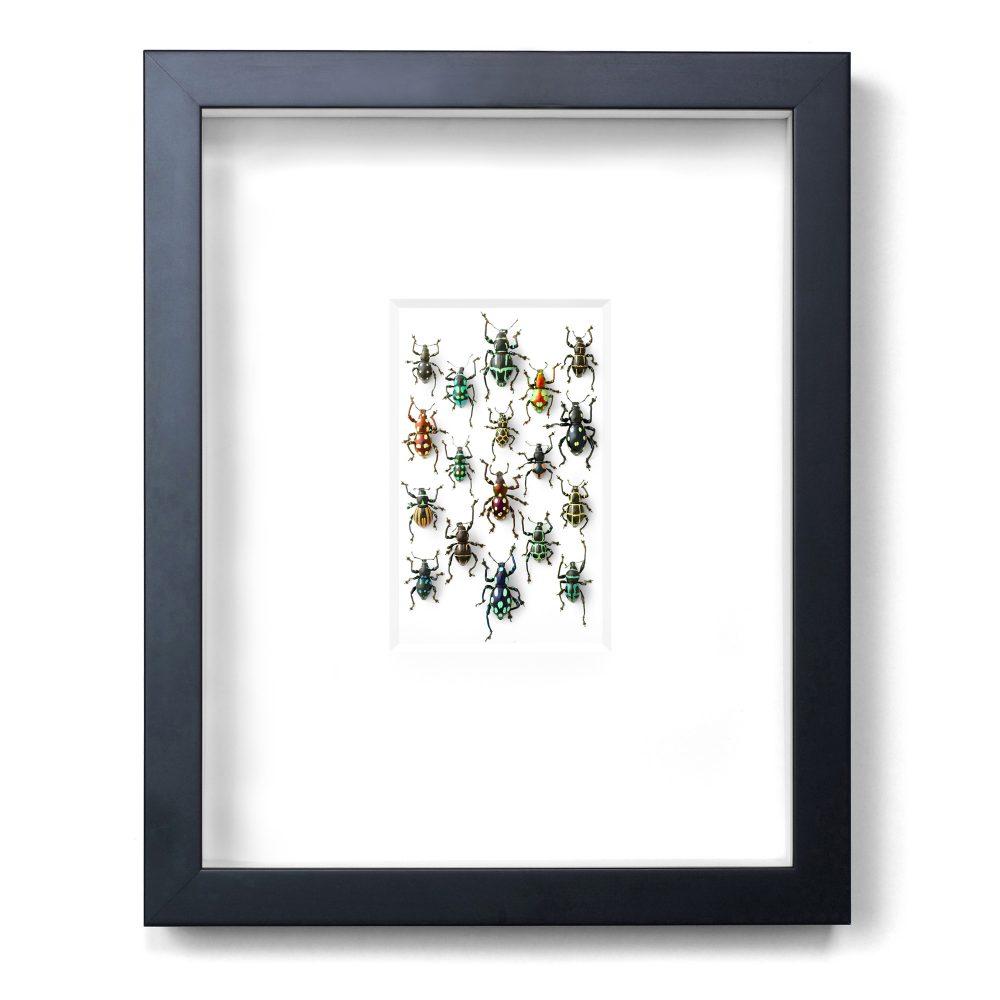 11 x 14 Walking Weevils