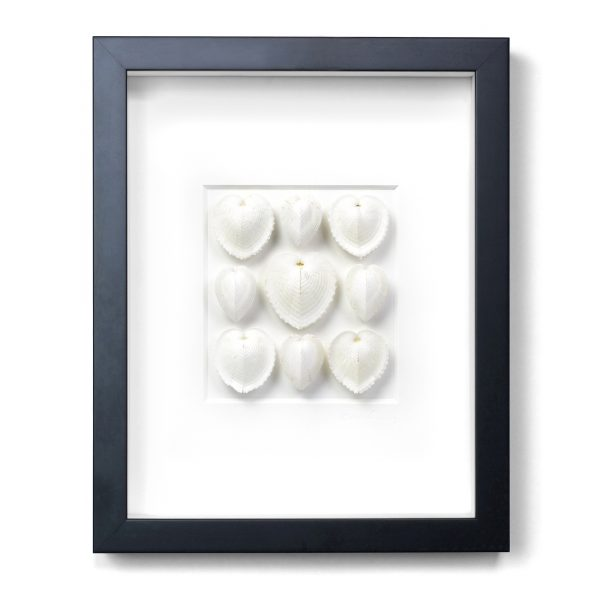 11 x 14 White Sea Hearts