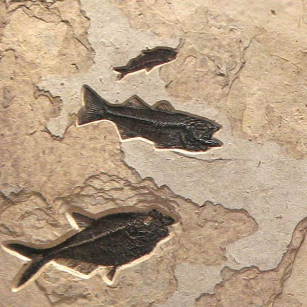 Fossil Mural 02_120905700gm