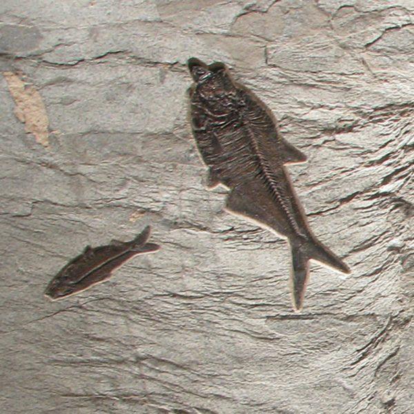 Fossil Mural 02_121605500cm